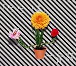 【オリコン加盟店】■一青窈 CD【「ただいま」】07/12/5発売【楽ギフ_包装選択】