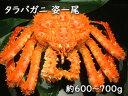 《送料無料》ボイルタラバガニ姿600〜700g/たらば蟹/タラバガニ/たらばがに/姿身/贈り物/北海 ...