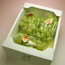【送料無料】甲本さんがこだわりぬいて作った桃太郎ぶどうです。樹上完熟桃太郎ぶどう3房2kg以上