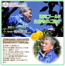 小田原パネティッシモクラシック3袋セット【パン】【湘南ゴールド】【パネトーネ】
