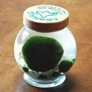 アクアリウム おみやげ プレゼント ガラス瓶