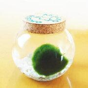 アクアリウム ナチュラル おみやげ ガラス瓶 グリーン