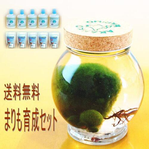 天然マリモ(外国産)1個 と 養殖マリモ5個 と まりものお食事5個 と ミネラ...
