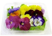 エディブルフラワービオラ(2P20花)お色指定不可