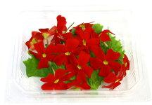 エディブルフラワーサンブリテリア(10花)