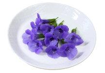 エディブルフラワートレニア紫(2P20花)
