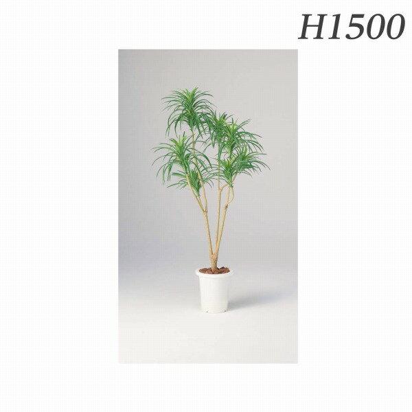 ライオン事務器 人工植物 ユッカ(グリーン) 約H1500mm AS-YG15 576-10【代引不可】:ドラッグスーパー alude