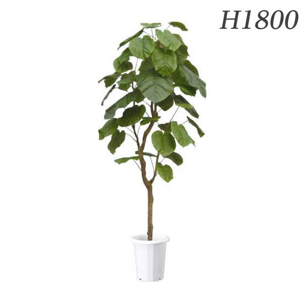 ライオン事務器 人工植物 ウンベラータ 約H1800mm ALU-002 576-28【代引不可】:ドラッグスーパー alude