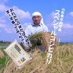 平成29年産山形県庄内町産減農薬栽培スペシャルコシヒカリ5kg
