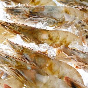 【生食OK!!無添加!】【冷凍】ハワイ産有頭海老カウアイの宝石(カウアイシュリンプ)1kg(約20〜30尾入り)