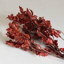 ピトスポラム レッド(40g入)プリザーブドフラワー フラワーアレンジメント 花材 花資材 1
