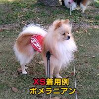 【Sサイズ】オーストラリアEZYDOG社イージードッグ犬用(ドッグ)アウトドア「ラッシュガード」|ドッグウェアレインウエア紫外線防止サーフィンアウトドアパグミニチュアシュナウザージャックラッセルテリアキャパリア