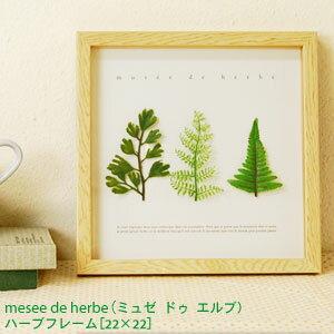 天然木を使用したフレームの立体感なデザインが素敵!ミュゼ ドゥ エルブ ハーブ フレーム (22...
