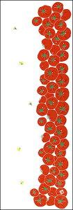 染の安坊 本染め手ぬぐい【人気】手ぬぐい「まっかなトマト」夏野菜/キッチン/ギフト