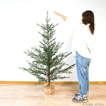 【予約受付】クリスマスツリー160cm送料無料【Hogewoning/ホーゲボーニング】