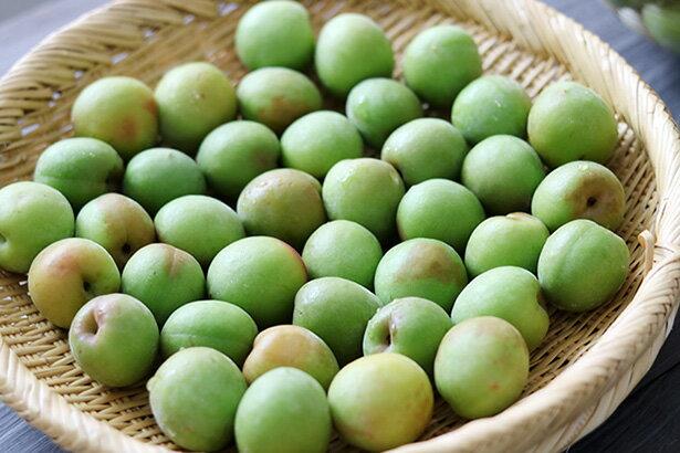 梅仕事の季節到来【前編】 自家製梅シロップ(梅ジュース)のつくりかた
