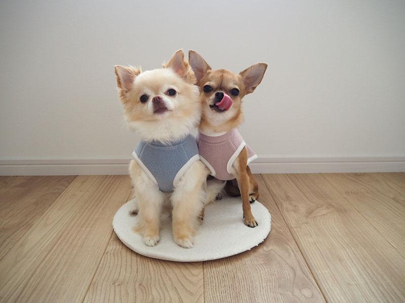 【インスタグラマーさんのものえらび】愛犬も喜ぶ、寒さ対策ドッグ用スリーパー使用レポ