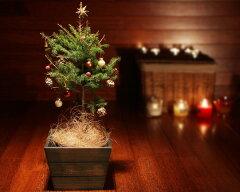 クリスマス/Xmas/リース/クリスマスリース /アンジェ【送料無料】クリスマス ミニツリー(オ...