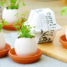 eggling エコフレンドリー 栽培キット