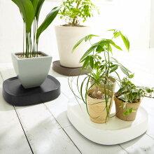 tidy Plantable 植木鉢トレー/ティディ