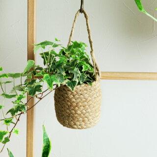 植物のある暮らし特集
