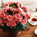 母の日/花/フラワーギフト/アレンジメント/花束/鉢植え /アンジェ[ 間もなく締切!早期特典 ...