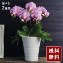 2021 母の日のお花 Paldies パルディエス ギフト アレンジメント 花束 鉢植え【送料無料】