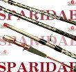 sparaidae-55