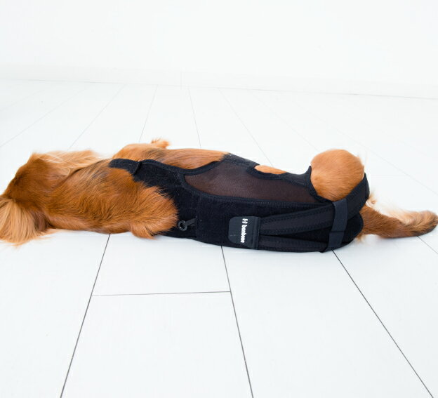 腰の負担軽減に【わんコル】Mサイズ グリーン 犬用コルセット ダイヤ工業 アニフル