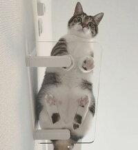 【クリアステップ】Catroad+キャットロードプラスanimacolleアニマコレキャットステップキャットウォークキャットタワーインテリア棚オシャレシンプルDIY猫ねこネコキャット