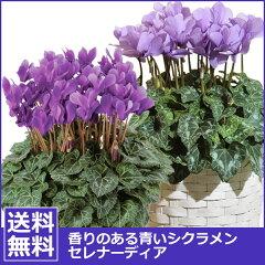 お歳暮に贈る花