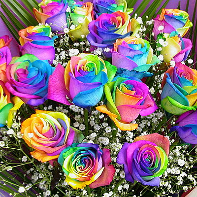 for How to color roses rainbow