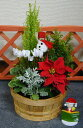 クリスマスプレゼントやお歳暮にぴったり!お洒落な寄せ植えは若いカップルからご年配まで喜ば...