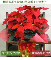クリスマスプレゼント お歳暮 ポインセチア鉢植えお誕生日 クリスマス お歳暮 お正月