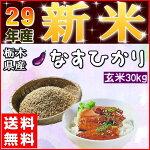 新米30kg送料無料お米30キロ『【29年産●新米】栃木県産なすひかり玄米30kg』【RCP】