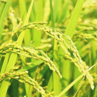 『農家直米(白米10kg×3)』