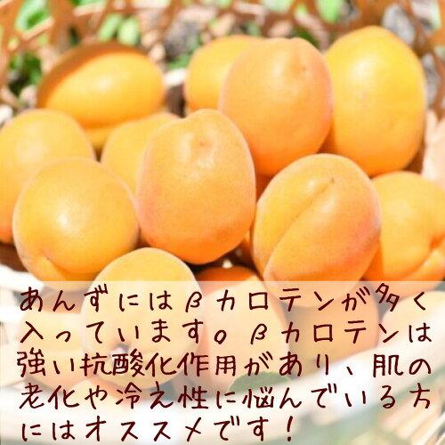 【国産杏のクランチチョコレート】あんずのスイーツ杏(アプリコット)チョコ。手作り干しあんずを増量し一層美味しくなりました。
