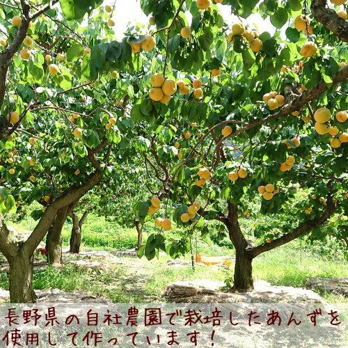 かわいい杏の実の入れ物ボトル、あんず酒、人気、ギフト、プチ、リキュール、かわいい