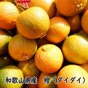 橙(ダイダイ) 5キロ ご家庭用 サイズ混合 無選別≪11月下旬頃より収穫予定≫【わけあり】【送料込】【和歌山県産】【お買い得】【だいだい】【RCP】