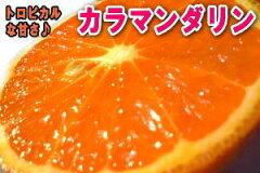 幻のオレンジ!糖度が高くてトロピカル☆ご家庭用 お試し1.5キロ♪【送料込】【わけあり】サイ...