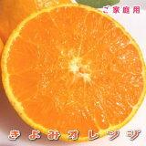 【送料込】ご家庭用 清見オレンジ 5キロ(サイズ混合 傷あり)【3月末〜4月上旬頃より収穫予定】【きよみ】【きよみタンゴール】【オレンジ】【わけあり】【訳あり】【送料無料】【お買い得】【ギフト】【RCP】