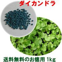 種子ダイカンドラコート100g6〜10平米分