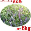 【種子】シロクローバー(ホワイトクローバー)品種名 KSWC1 お徳用500g袋!カネコ種苗のタネ