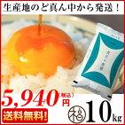 青森ブランド青天の霹靂10キロ食味「特A」