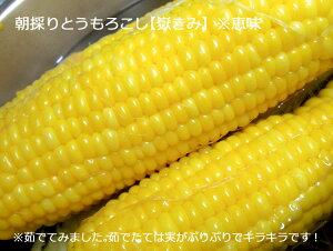 朝採りとうもろこし【嶽きみ(だけきみ)】10本セット※冷蔵(品種:恵味)