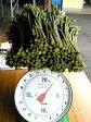 [予約受付中][5月初旬発送開始][クール便発送]山菜 【生わらび】 2kg【アグリコマガタ】