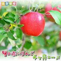 旬の赤いりんご4ヶ月コース