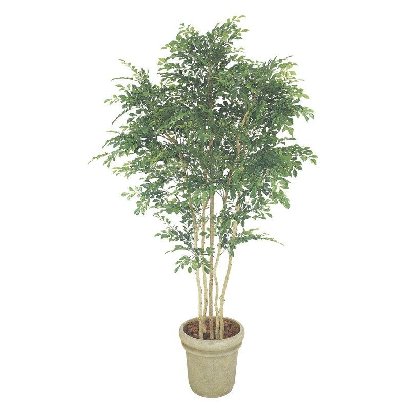 人工植物 造花/トネリコ 5本立 1.8m /GD-150/フェイクグリーン/ディスプレイ/飾り:青山ガーデン