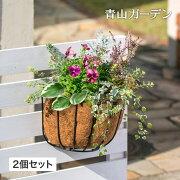 QsuiAquaウォールハンギングバスケット12個セット/PQA-02