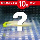 ハゼ MIX 10匹セット!海水魚 生体 ハゼ 15時までのご注文で当日発送【ハゼ】